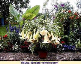 plante tropicale qui resiste au gel